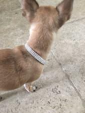 Bijou collier strass pour petit chien