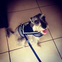 harnais veste marine pour chien