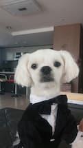 tenue de mariage pour chien