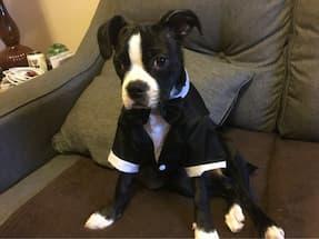 chien habillé en costume noir