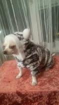 polaire pour petit chien
