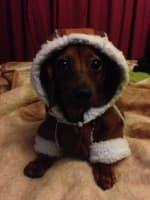 doudoune fourrée pour petit chien