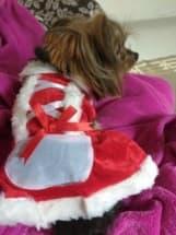 vêtement de noel pour chien