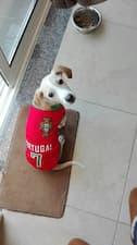 chien porte maillot des joueurs de foot du Portugal