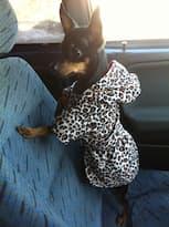 manteau robe pour petit chien