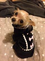 vêtement polaire pour chien