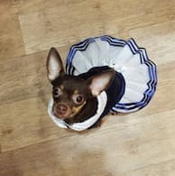 chien avec robe au look marin