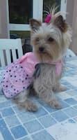 robe de princesse pour petit chien
