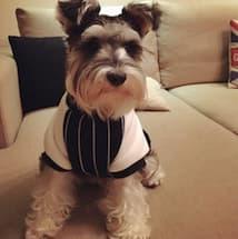 veste look sportif pour chien