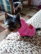 pull fraise rose pour petit chien