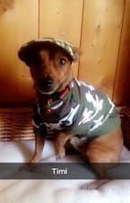 t-shirt militaire pour chien