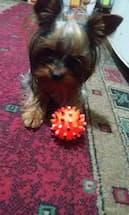 jouet avec son pour chien