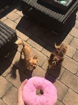jouet imitation beignet avec bruiteur pour chien