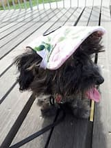casquette en toile pour animal
