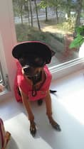 chapeau pour petit chien