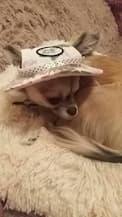 petit chien en chapeau à fleurs