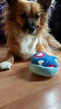 pantoufle sonore pour chien