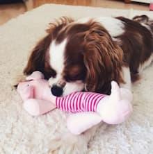 jouet sonore pour petit chien