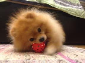 balle de jeu pour petit chien