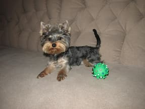 balle rebondissante en caoutchouc pour chien