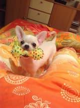 jouet avec bruiteur pour chien