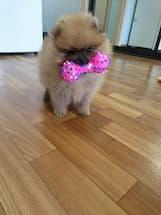 accessoire de jeux pour petit chien