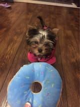 peluche en forme de donut pour chien