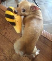 jouet amusant pour petit chien