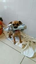 peluche avec siffleur pour chien
