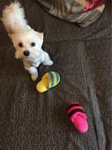 jeux avec chausson pour chien