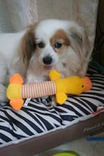 jouet canin avec bruiteur