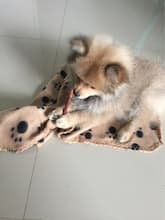 couverture polaire pour chien