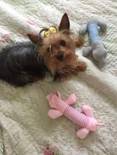 accessoire de jeux pour chien