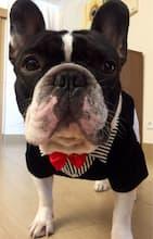 vêtement classe de soirée pour chien