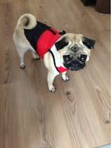 manteau matelassé sans manches pour chien