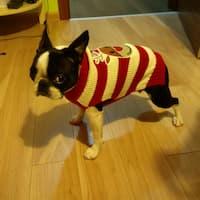 chien habillé avec pull renne de noël
