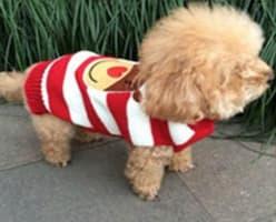 chandail d'hiver pour chien