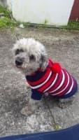 pull rayé à capuche pour chien