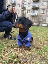 vêtement chic pour petit chien
