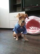 chemise été pour chien