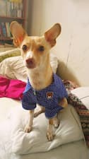 chemise classe pour chien
