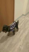 chemise à carreaux pour chien