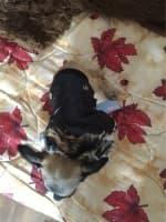 habit chaud pour petit chien