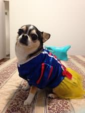 robe blanche-neige pour petit chien
