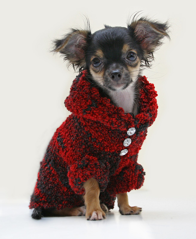 manteau pour petit chien