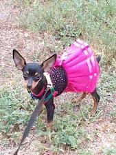 petit chien porte robe avec tutu
