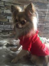 pull capuche pour noel pour petit chien