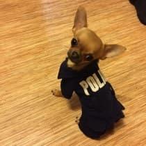 uniforme pour chien