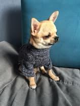 pull tricoté pour petit chien