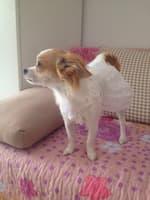 vêtement mariée pour femelle